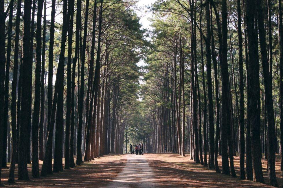 jornadas y campamentos para el verano