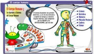 Cuerpo humano en Primaria: 25 recursos por descubrir 2