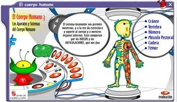 Conoce el cuerpo humano
