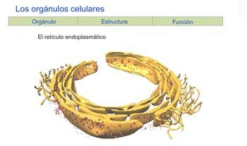 Biología y Geología. Educación Secundaria Conocer el cuerpo humano
