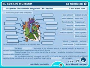 Cuerpo humano en Primaria: 25 recursos por descubrir 13