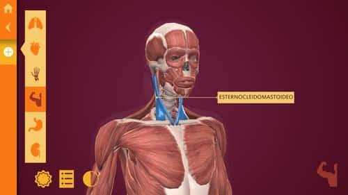 Arloon Anatomy: El Cuerpo Humano, una app para aprender anatomía