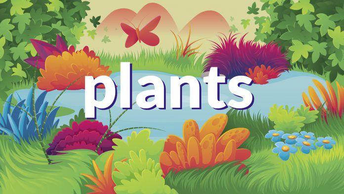 App Plants: ¿Y si plantaras en clase un girasol o un manzano? 1