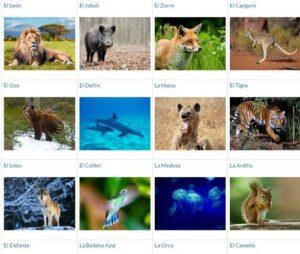 10 recursos para aprender sobre los animales 9