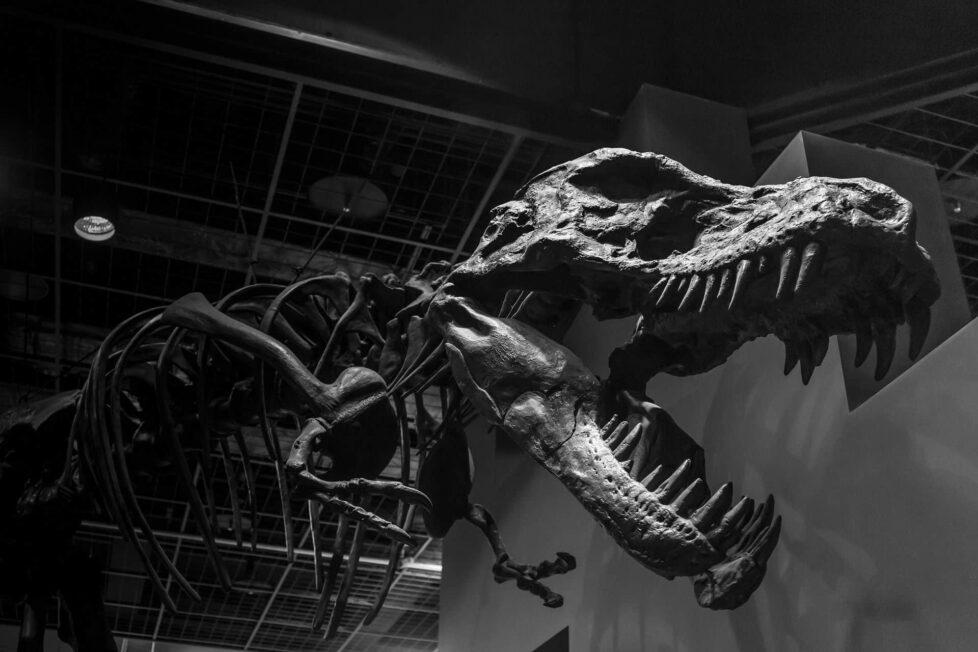 10 apps educativas sobre el mundo de los dinosaurios 6