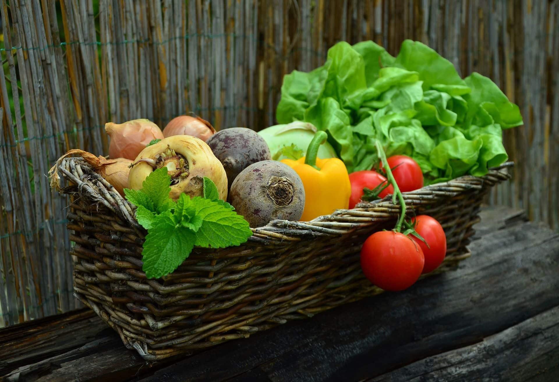 la importancia de la buena alimentacion en los estudiantes