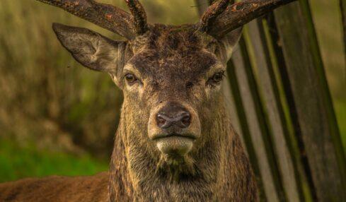 TED-Ed Lessons sobre animales para entender mejor la naturaleza