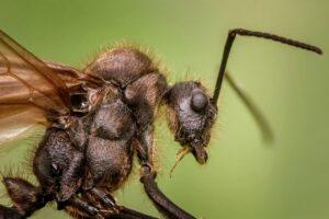 Detalle de una hormiga / Pixabay