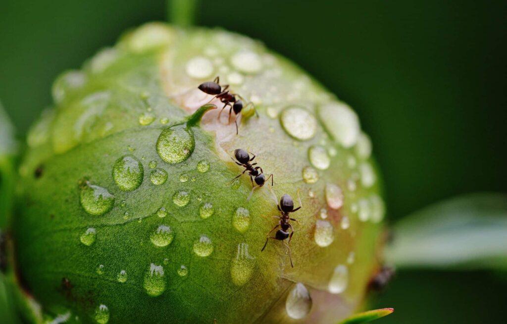 Hormigas en la naturaleza / Pixabay