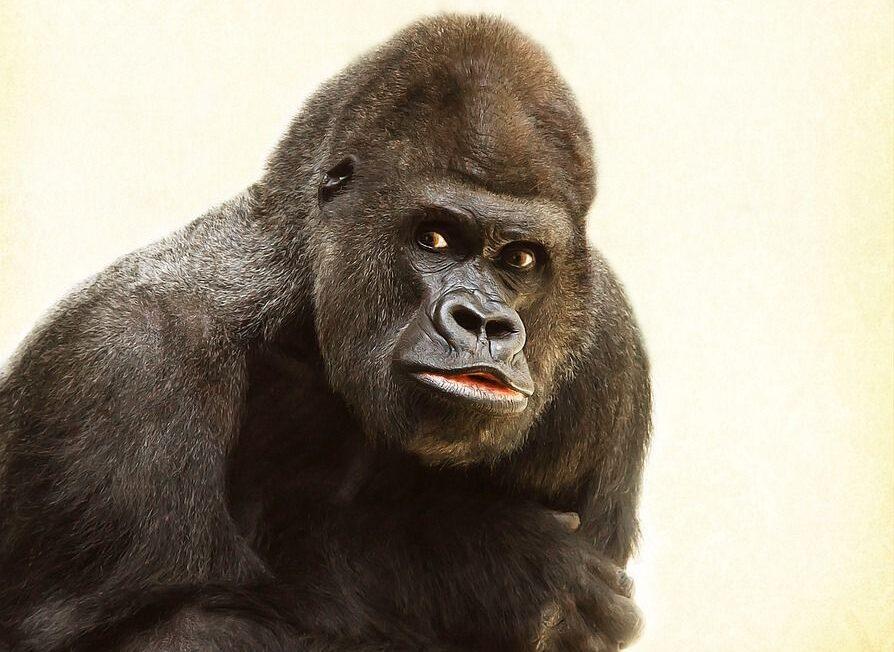'El mono sabio', una dinámica grupal para desarrollar la atención 1