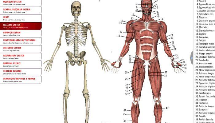 el cuerpo humano apps