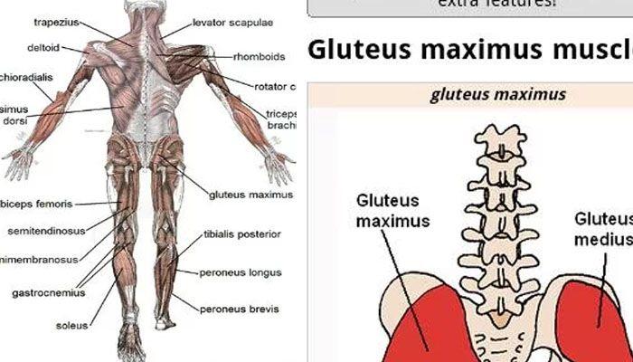 el cuerpo humano Human Anatomy