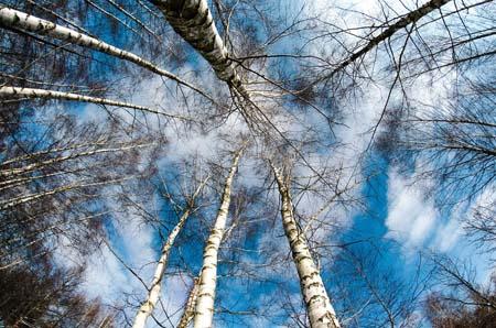La Naturaleza como aula de Filosofía 1