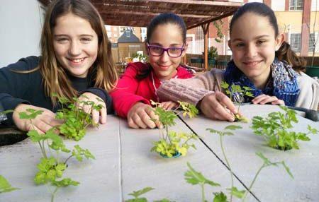 Cuando los peces alimentan a las plantas: un proyecto escolar de aquaponia 1