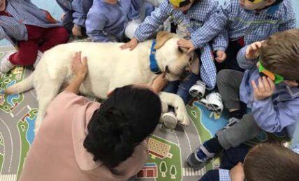 Educación emocional asistida con perro en escuelas infantiles 1