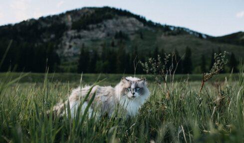 El Proyecto Scratch de los viernes (XXIX): cazando al ratón 5