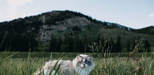 Cat-jenn-evelyn-ann-unsplash