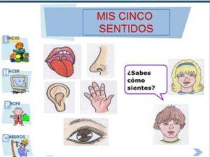20 recursos para trabajar los cinco sentidos en Educación Infantil 11