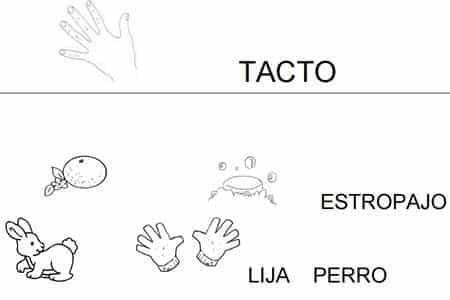 Mis cinco sentidos