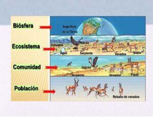 Recursos para Biología en Secundaria y Bachillerato 11