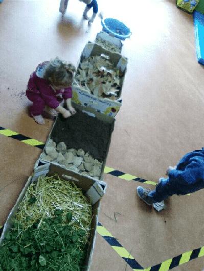 Naturaleza primer ciclo de Infantil
