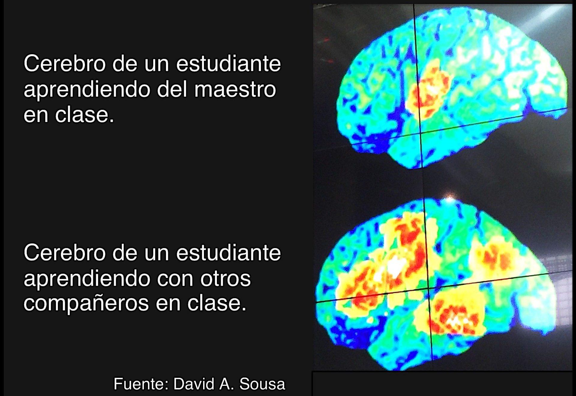cerebro maestro