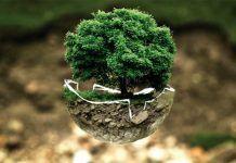 Día Mundial de la Educación Medioambiental