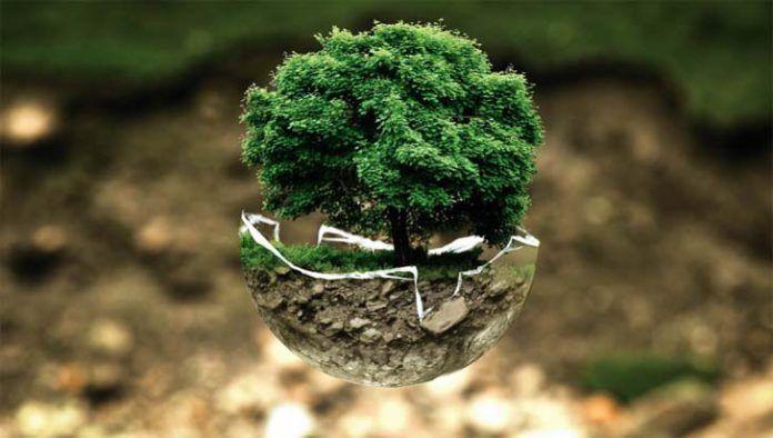 Celebra el Día Mundial de la Educación Medioambiental con estos recursos 1