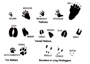 Día Mundial de la Naturaleza (3 de marzo): ¡Celébralo con estos recursos! 4