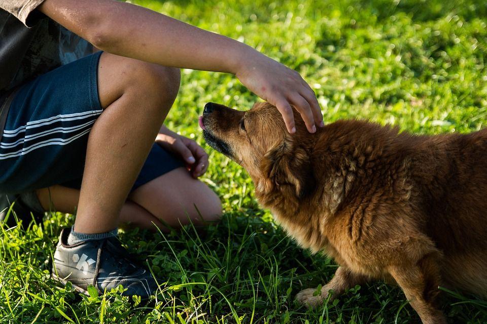 ¿Se debería integrar en la escuela el respeto a los animales? 1