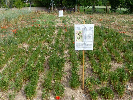 experiencia parque agrícola metodologías activas