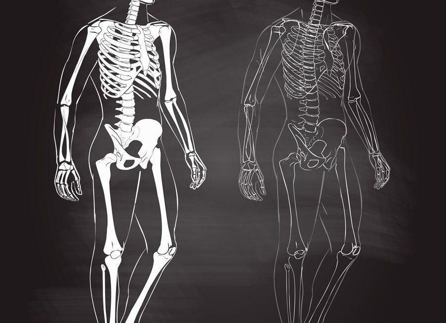 vídeos sobre el cuerpo humano