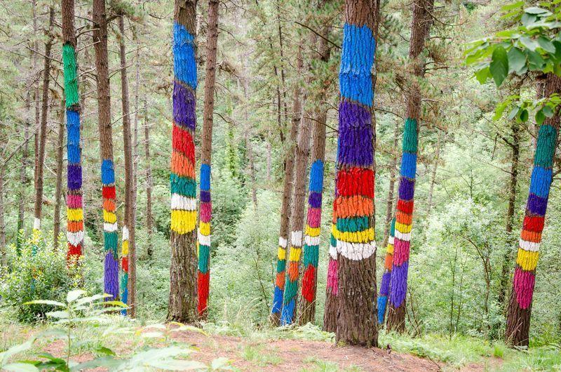 El bosque de Oma rutas para hacer en familia