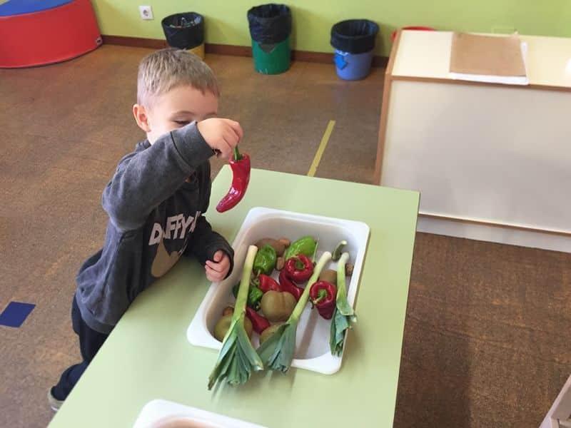 Huerto vegetales