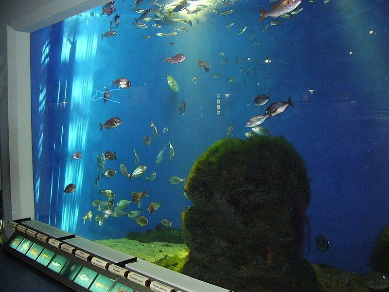 Aquarium Finisterrae A Coruña acuarios para visitar en familia