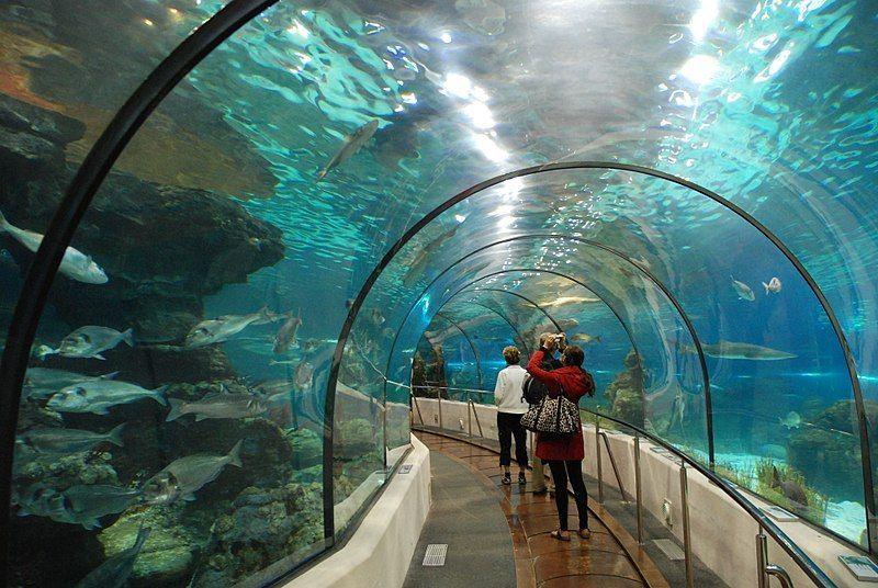 Aquarium Barcelona acuarios