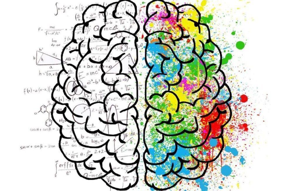 libros neurociencia