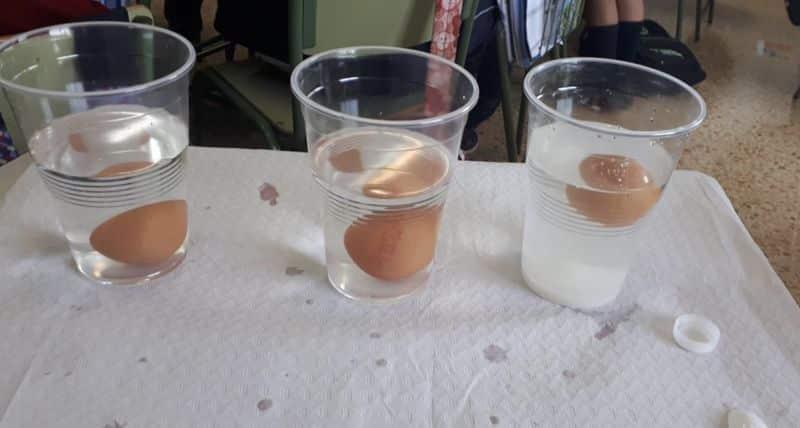 experimento huevos química