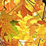 otoño naturaleza
