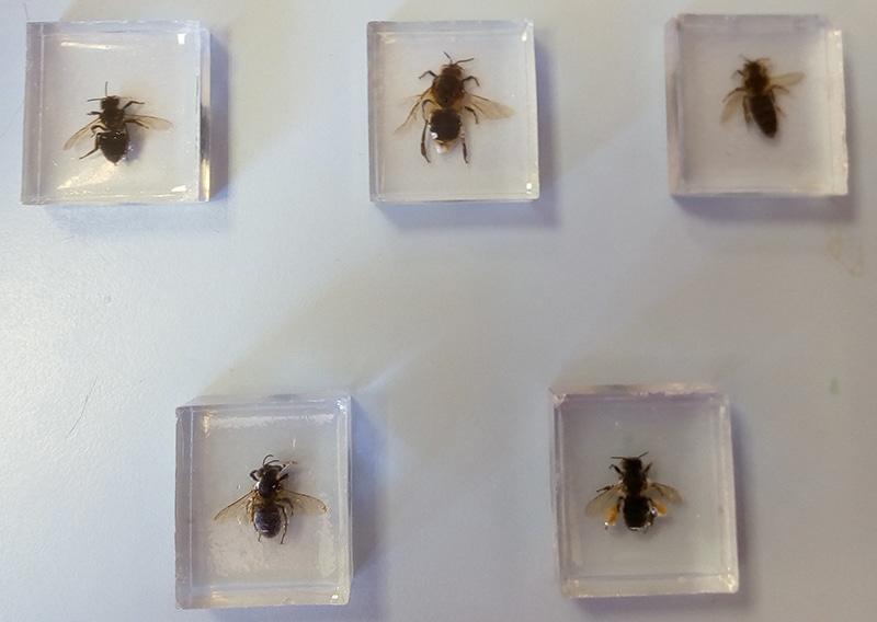 Educar en medioambiente - abejas y zánganos