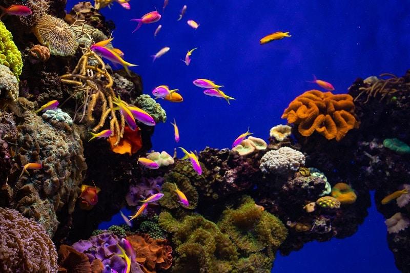 Fondo marino con peces de colores