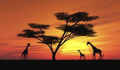 Tours virtuales safaris zoológicos