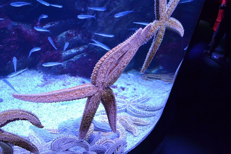 Starfishes Donostia San Sebastian Aquarium