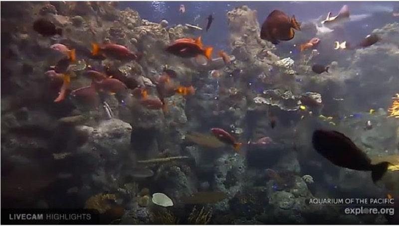 Webcam de 'aquarium of the pacific' .