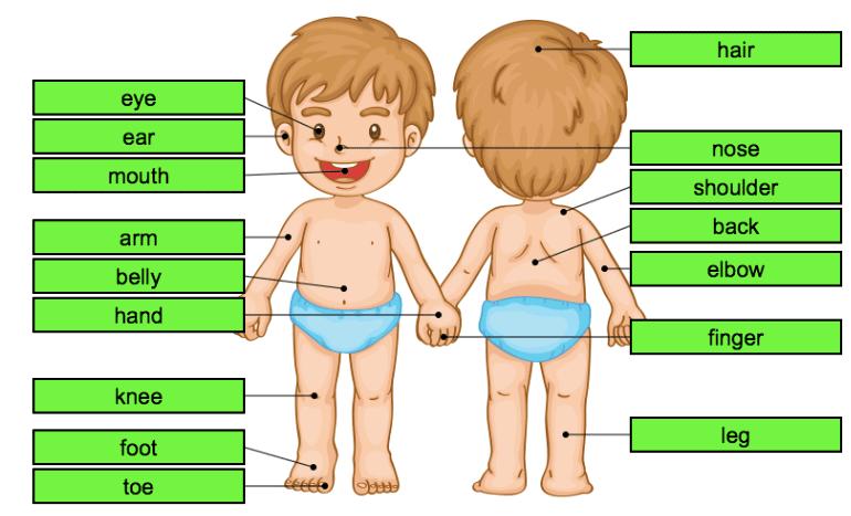 juegos cuerpo humano