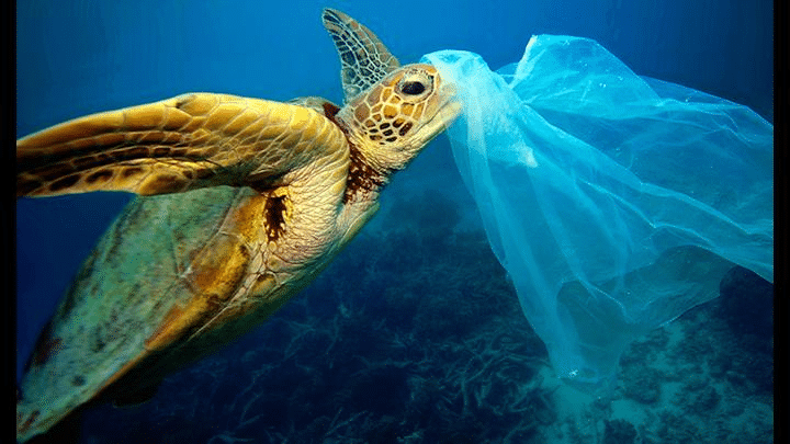 océanos contaminados