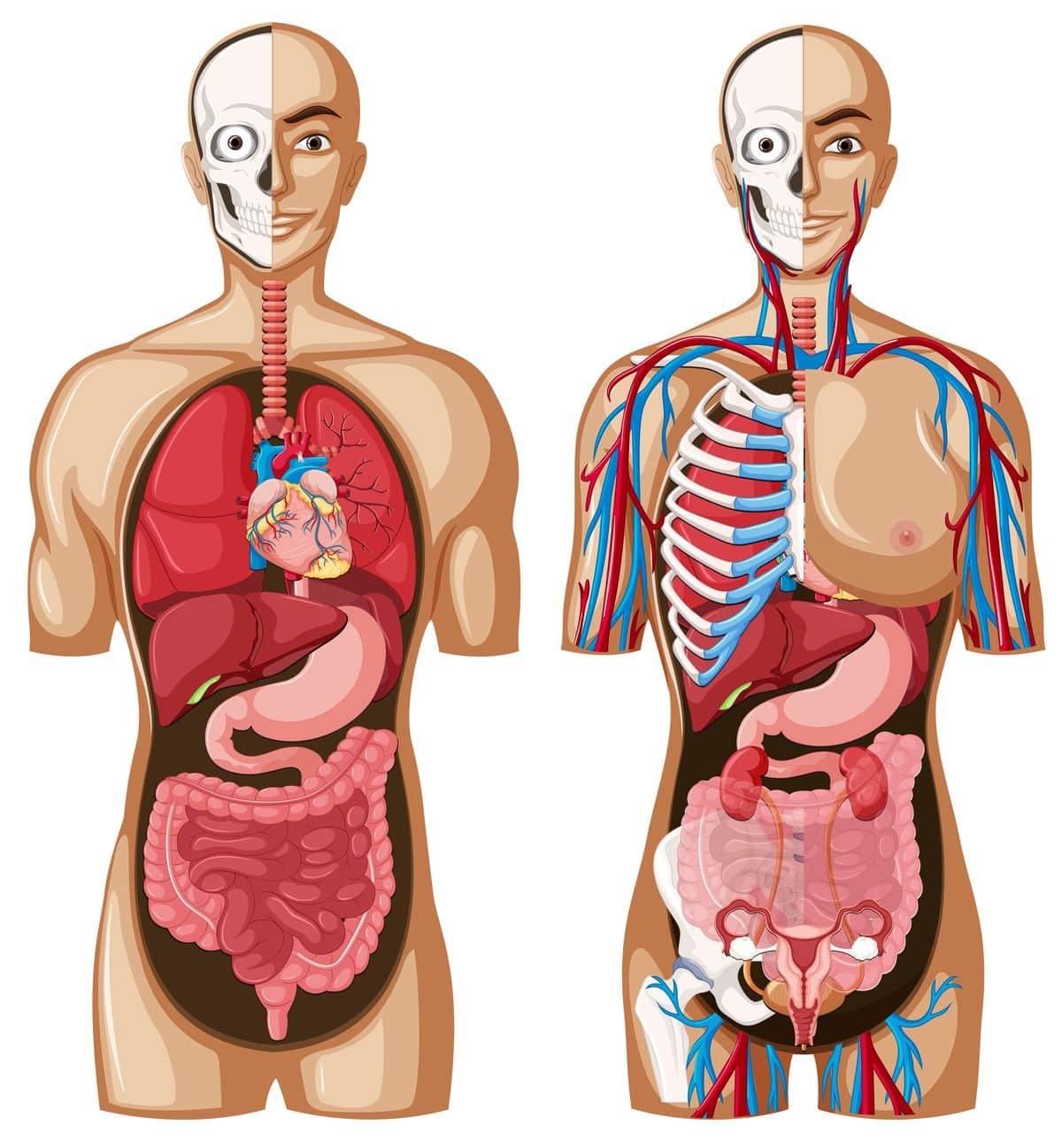 libros cuerpo humano