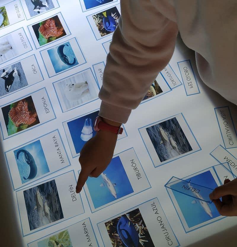 Un niño señala tarjetas de animales marinos en una mesa de luz