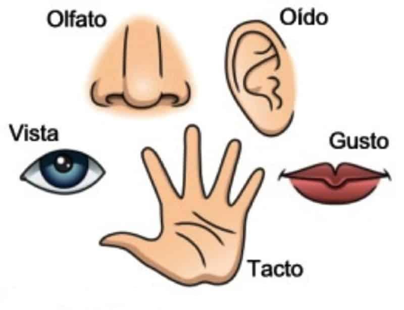 ¡A jugar con los cinco sentidos!