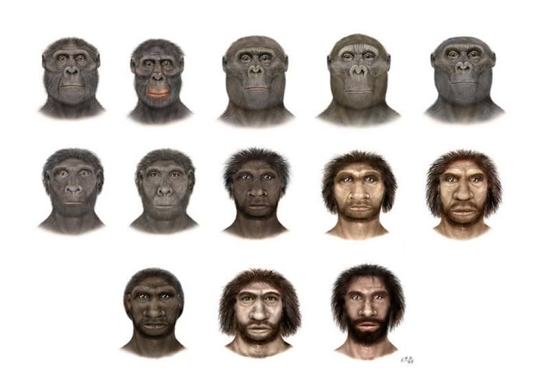 Profesor Francisco recursos prehistoria